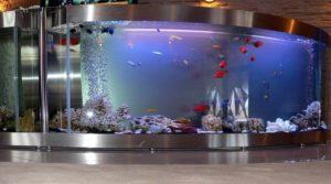 аквариум из орсгеткла 1