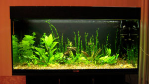 аквариум из орсгеткла 3